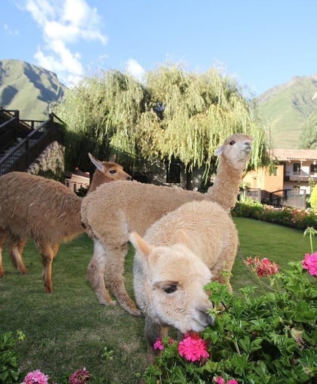 Jardin Yucay Sonesta Hotel Posadas del Inca Yucay Yucay, Peru